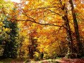 Modifications d'horaires pour les congés de la Toussaint du 22 octobre au 3 novembre